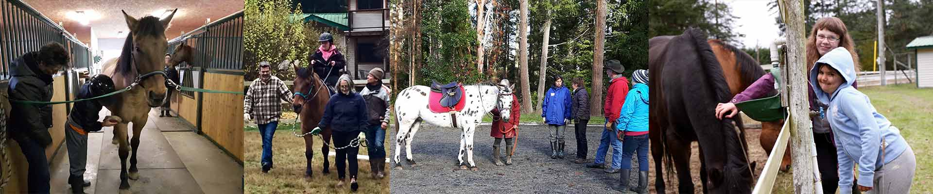 salt spring island riding,therapeutic riding,sstra,salt spring island horse,salt spring island horseback,salt spring island horse back,salt spring island equestrian