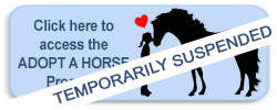 Adopt a pony access